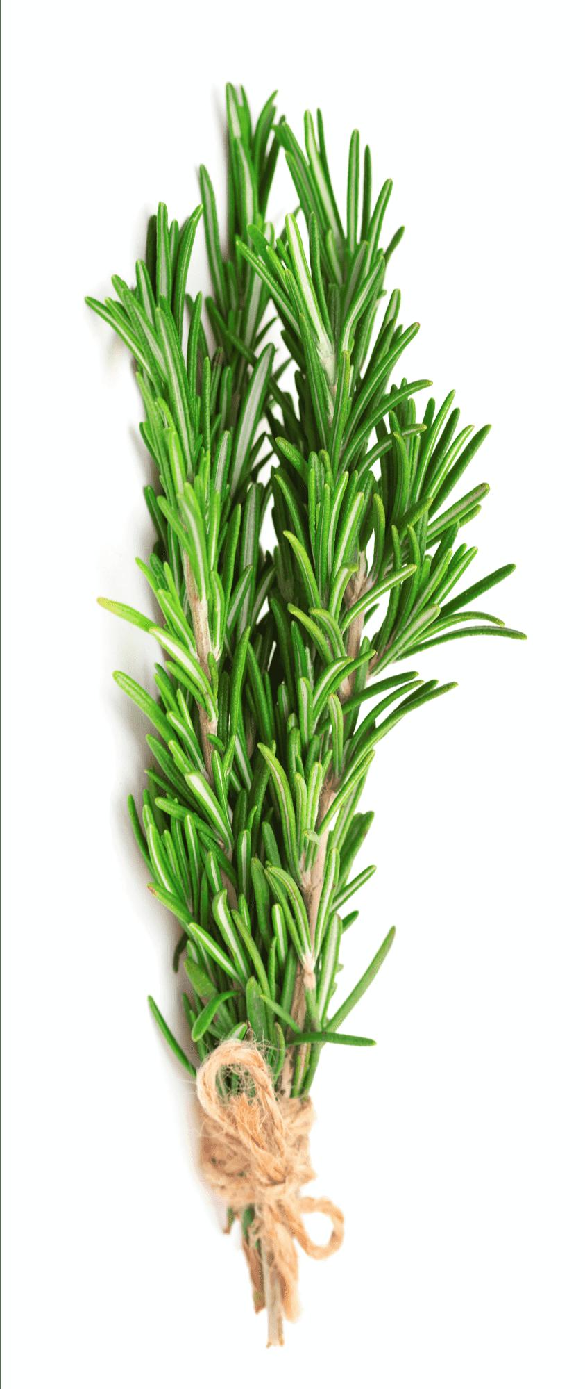 Rosemary Herb | BBQanswers